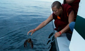 A Buddhist monk releases a lobster into the ocean.