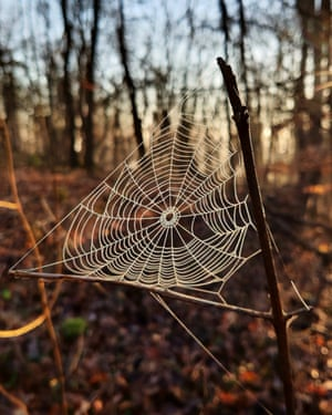 A spider web on 1 March, in Cilcain, Wales.