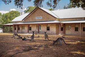 A kangaroo drinks from a hose at Wilcannia Hospital on March 04, 2019 in Wilcannia, Australia.