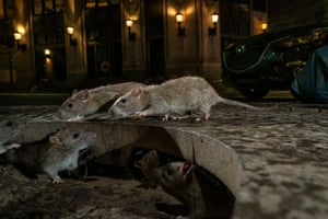 Urban wildlife winner: The Rat Pack by Charlie Hamilton James, UK (picture taken in New York)