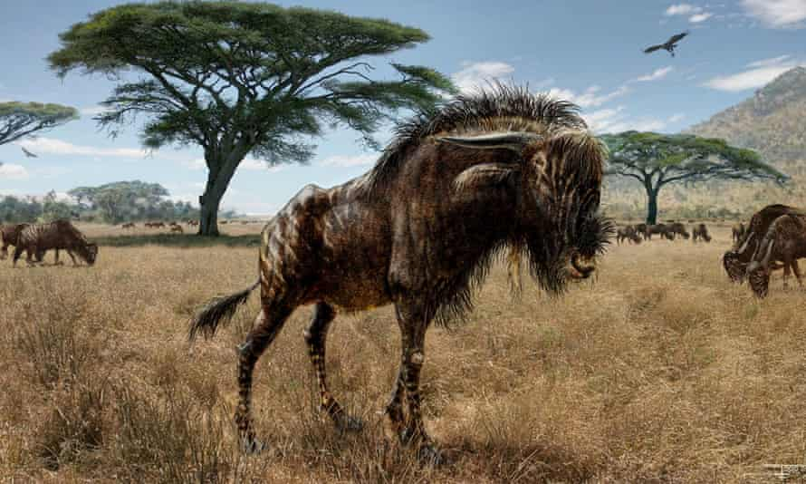 Scientists say fossils unearthed in Kenya show that a horned, hoofed grass-eater roamed tens of thousands of years ago. the Rusingoryx boasted an odd nasal structure unlike any other mammal, past or present.