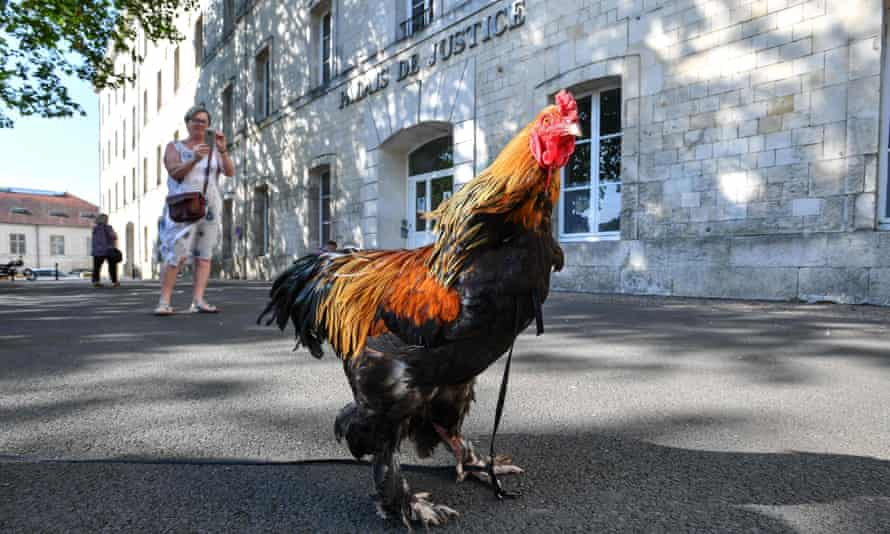 A cockerel stands outside the court in Rochefort, France
