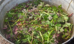 Nettles make a zingy soup in spring.