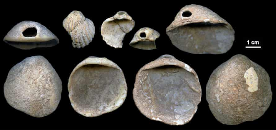 Some of the perforated shells found in the Aviones cave and dated to between 115,000 and 120,000 years ago.