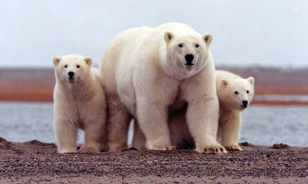 The Arctic National Wildlife Refuge has been protected for decades.