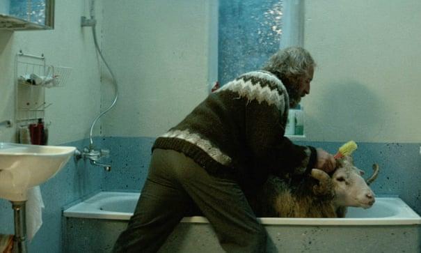 Rams review – sly Scandi sheep saga | Film | The Guardian