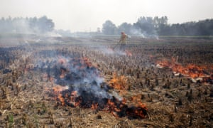 An Indian farmer burns stubble