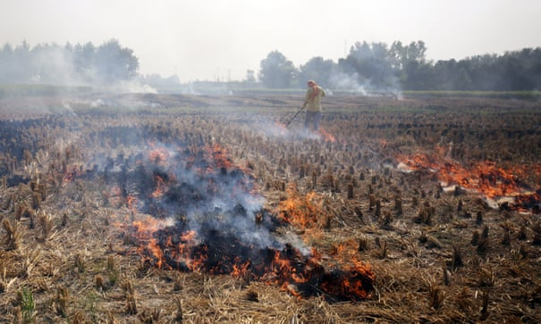 How to beat air pollution? Stop burning the fields | World news