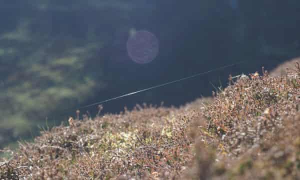 A gossamer thread in heather on Blencathra.