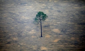 Brazil S Amazon Deforestation This Year Nearly Size Of Puerto Rico