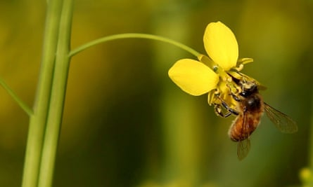 The newly revealed studies show Syngenta's thiamethoxam and Bayer's clothianidin seriously harmed bee colonies at high doses.