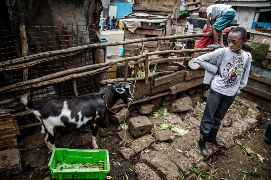 Young people from Huruma volunteer to work on the farm