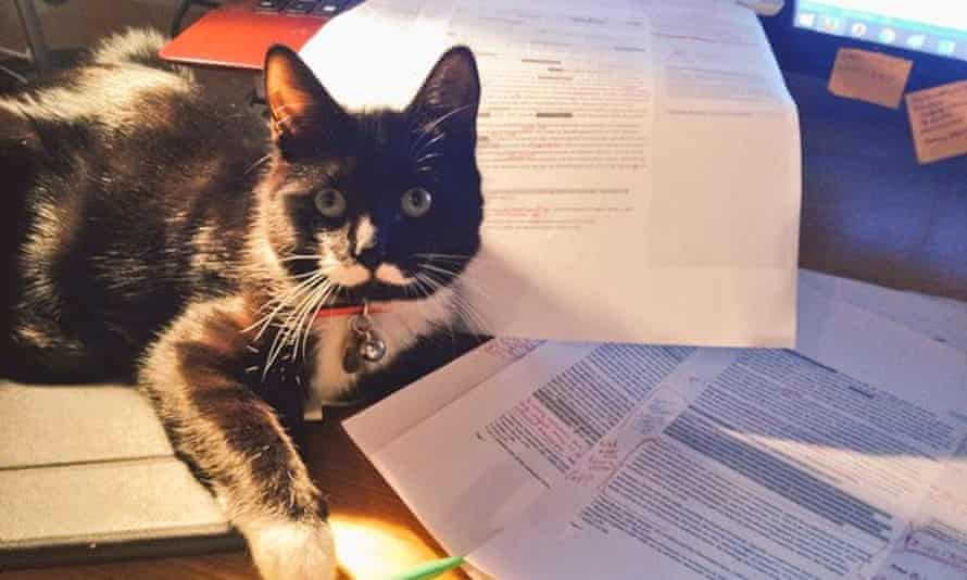 The competition includes a prize for the best feline research assistant.