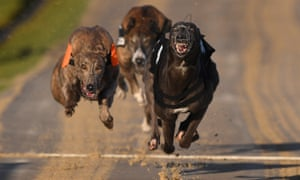 The Greyhound Board of Great Britain said the industry was determined to eradicate avoidable injuries and unnecessary deaths.