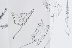Fallen leaf drawings from Susie White's leporello