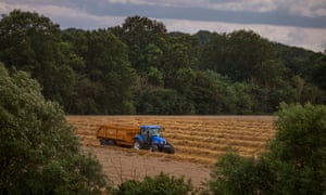 A tractor at work in a wheatfield