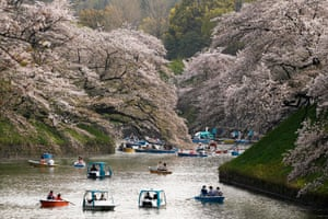 People row boats on Chidorigafuchi Moat, northwest of the Imperial Palace in Tokyo. The cherry blossom bloom is now moving northwards and many Japanese people are waiting for news of the cherry blossom front arriving in their regions