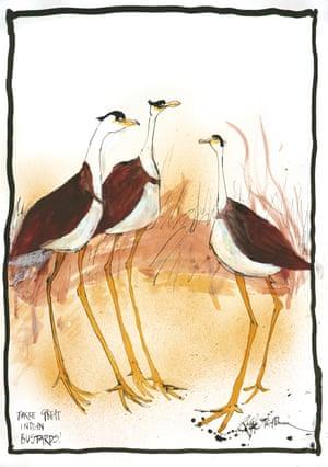 Three Great Indian Bustards! by Ralph Steadman