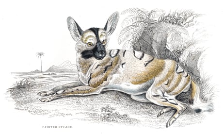 The African painted dogs that vote by sneezing and run on 'shadow puppet legs' | Helen Sullivan