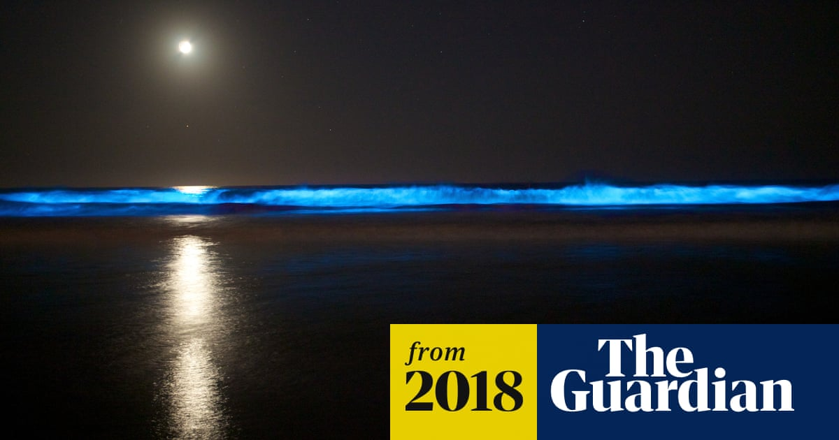 Incredible' bioluminescence gives California coastline an eerie blue