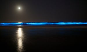 A blue glow in the surf has been observed during hours of darkness along a 15-mile stretch of coast.