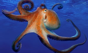 octopuses from space and other definitely accurate stories the
