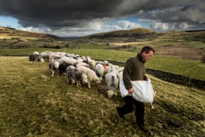 Thomond. MATTERDALE END 24th March 2015 - Herdwick shepherd James Rebanks working on his farm at Matterdale End in Cumbria.