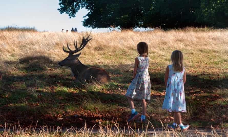 Children enjoy the wildlife in Richmond Park, London