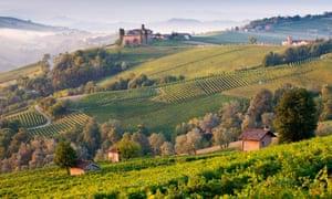 Vine appreciation: rolling hills in Langhe, Piedmont.