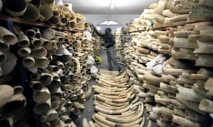 Tusks seized from poachers are stockpiled in Harare. The trade will only be ended when it become socially unacceptable to own ivory.