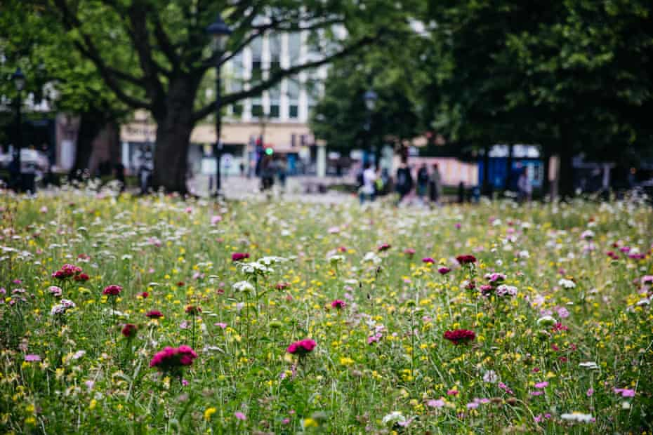 Flowers on College Green in front of Bristol Cathedral