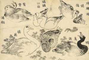 2020,3015.4 'Varias aves acuáticas' Estudios de varios tipos de aves acuáticas que nadan y se zambullen entre las malezas de los ríos.  Este trabajo parece haber sido concebido como una especie de tesauro de imágenes.  A menudo, se dan varios nombres variantes, algunos arcaicos, otros aparentemente fantasiosos, para un ave en particular.  Aquí se nombran, en el sentido de las agujas del reloj desde la parte superior derecha: zampullín pequeño, pato real / pato salvaje, cisne, pato mandarín / ave acuática y gaviota (charrán).  El zampullín buceador (en la silueta superior derecha) y el ánade real (centro inferior) aparecen de nuevo en la famosa pintura de BM, Patos en agua corriente, realizada en 1847, cuando Hokusai tenía 88 años (BM 1913,0501,0.320).  hokusai Hokusai: Exposición del gran libro ilustrado de todo en el Museo Británico.