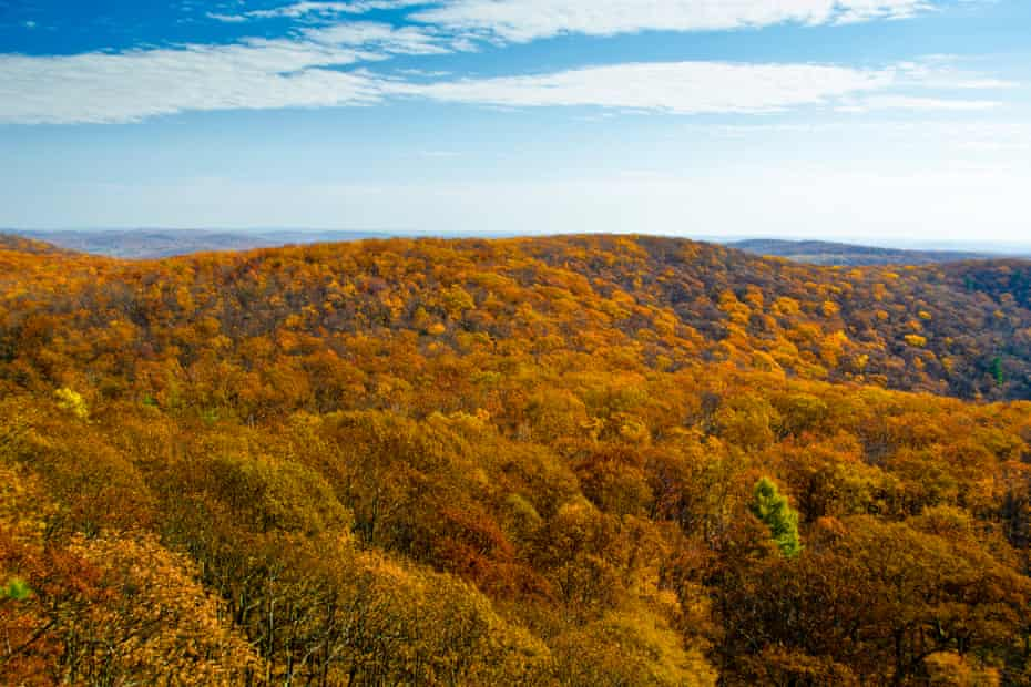 Autumn foliage In Black Rock Forest.