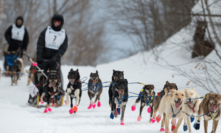 Blair Braverman's Welcome to the Goddamn Ice Cube recounts her time as a dog musher