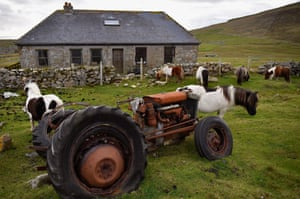 Foula is an important research station for Glasgow University zoologists