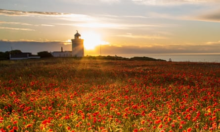 Poppies on the White Cliffs.