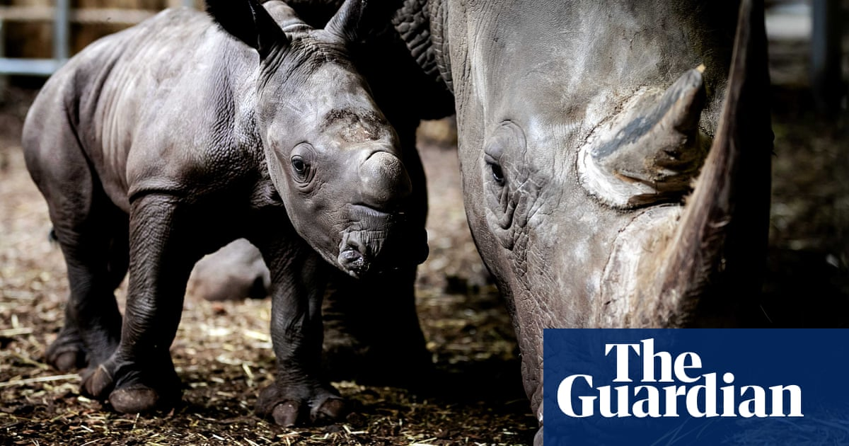 A newborn rhino and alluring lavender: Monday's best photos