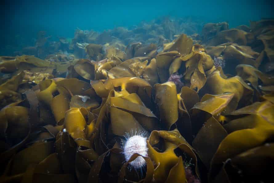 Underwater Sealife, Canna, Scotland