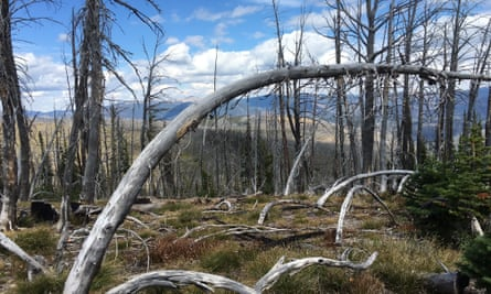 Part of Helena-Lewis and Clark national forest still recovering from a 2003 wildfire.
