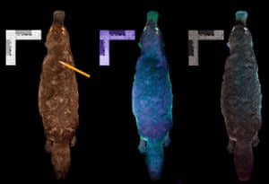 A composite image of a platypus under various UV lights.