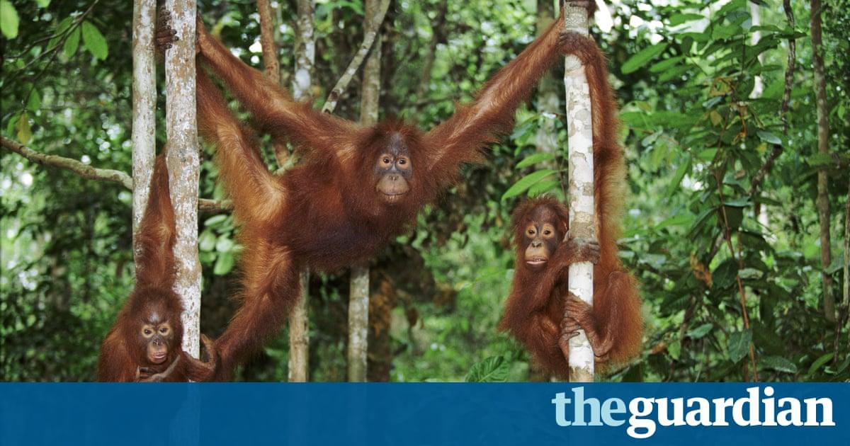 David Attenborough ataca plan para el puente de Borneo