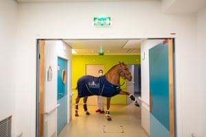 Peyo decides which patient he wants to visit at the palliative care centre and Calais Hospital