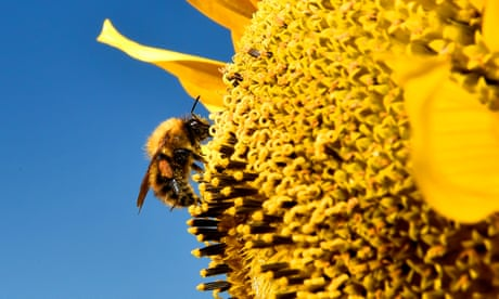 Pollen data shows humans reversed natural global cooling
