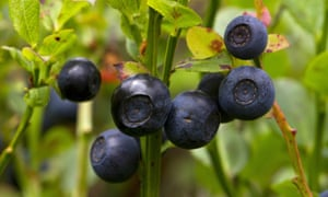 Close-up of ripe fruit growing on bush