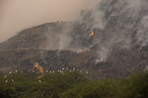 Egrets and dogs gather in the foreground during a fire at a landfill site in eastern Delhi. The thick smoke that has engulfed the Ghazipur facility is a further blow to the nationwide drive for clean air. The populous city has remained in the 'very poor' air quality category over consecutive days this month