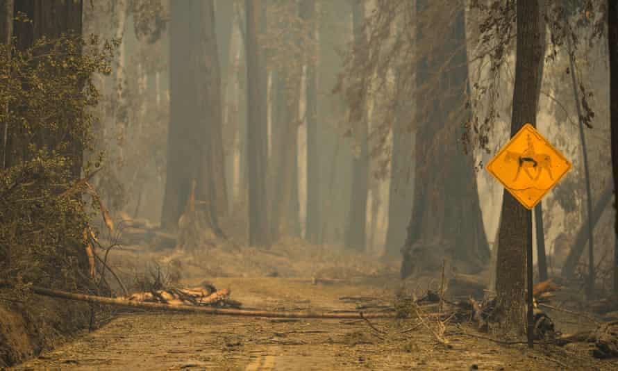 Smoke hangs low in the air at Big Basin Redwoods state park in Boulder Creek, California.