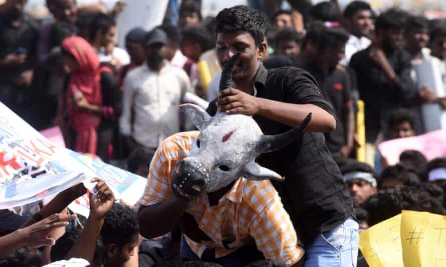Indian students demonstrate against the ban on jallikattu at Marina Beach, Chennai
