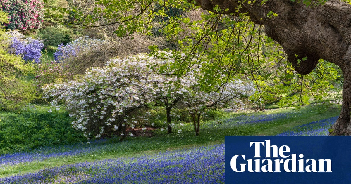 Blossom watch day: National Trust urges UK to share blooms