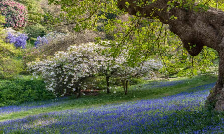 Glendurgan garden, Falmouth, Cornwall, UK.