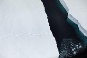 A polar bear's footprints on the ice.